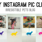 DIY Instagram Pic Clips for Pet Lovers
