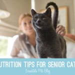 Senior Cat Nutrition Tips #HillsPet