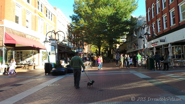 Charlottesville Downtown Mall Dog Friendly