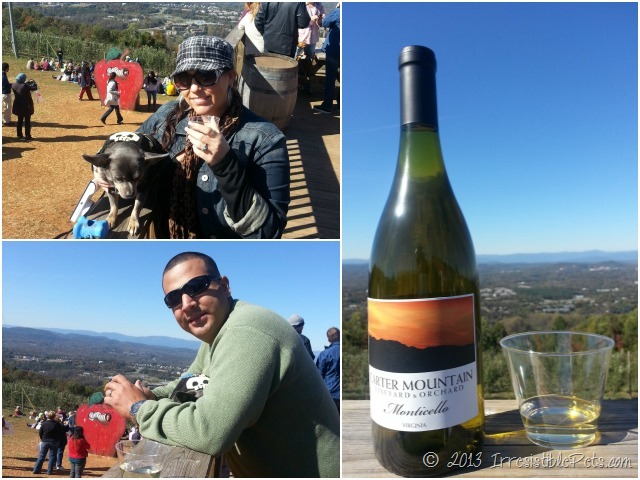 Carter Mountain Wine Tasting