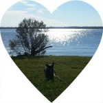 Munden Point Park with Chuy Chihuahua