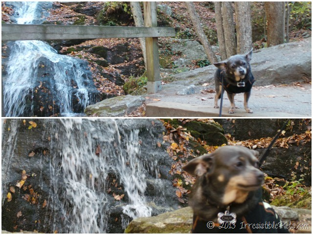 Crabtree Falls Dog Friendly
