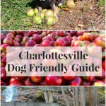The Irresistibly Dog Friendly Guide to Charlottesville, Virginia
