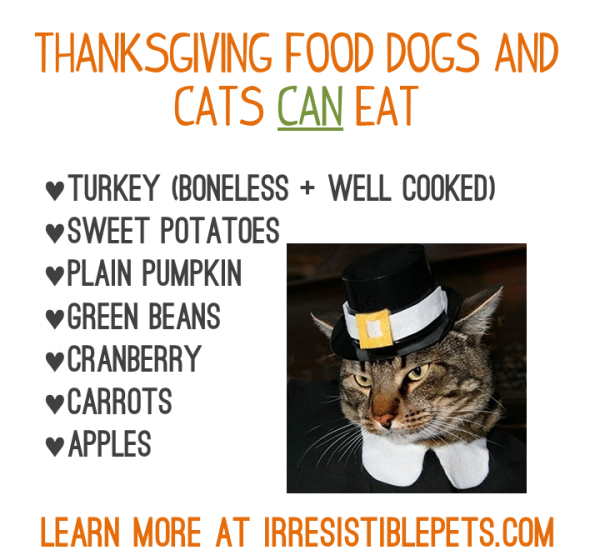 Thanksgiving Food Dogs and Cats Can Eat - Learn More at Irresistiblepets.com