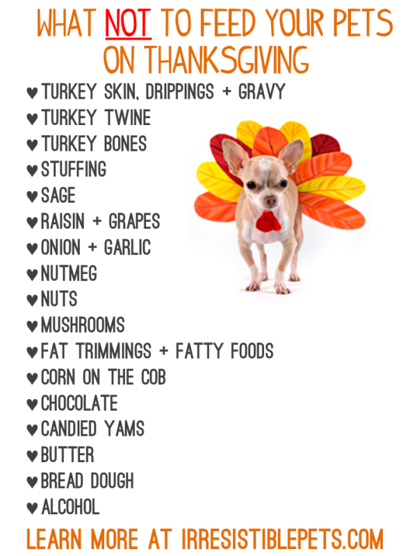 Thanksgiving Foods That Are Dangerous to Dogs and Cats - Learn More at IrresistiblePets.com