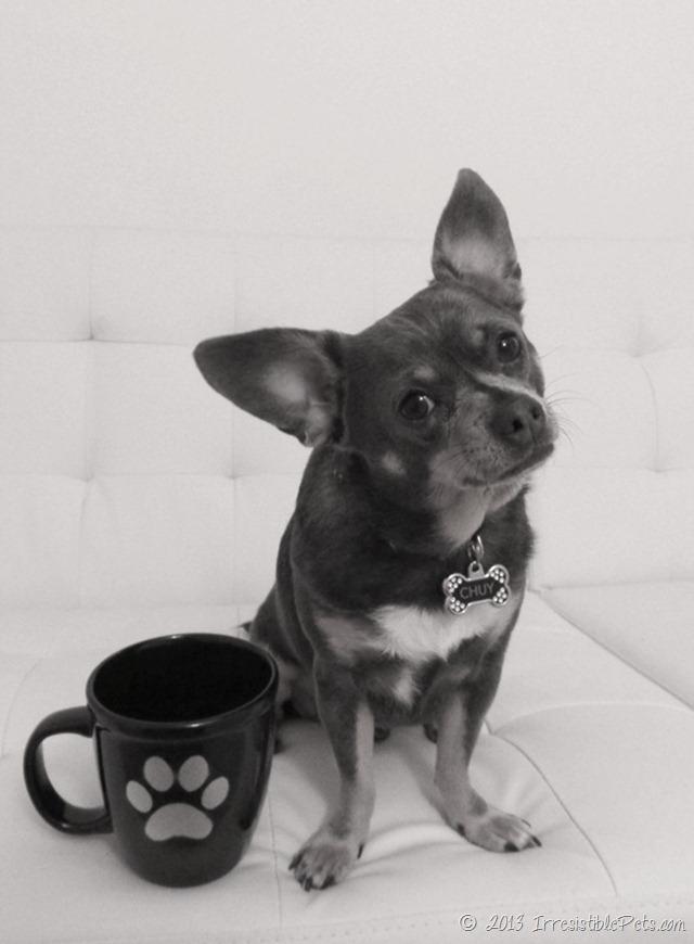 DIY-Paw-Print-Coffee-Mug-Chuy-Chihuahua-Portrait-BW_thumb.jpg