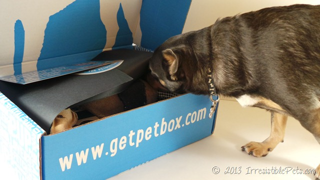 PetBox Review by IrresistiblePets.com 2