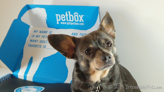 PetBox Review by IrresistiblePets.com and Chuy Chihuahua