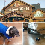 Chuy Chihuahua at Bass Pro Shops