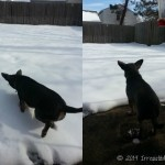 Chuy Chihuahua's Snow Day Adventures!