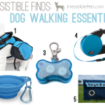 Five Irresistible Dog Walking Essentials