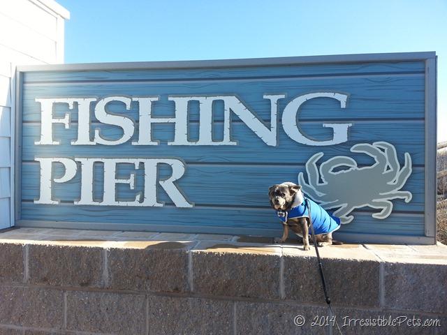 Sandbridge Fishing Pier with Chuy Chihuahua
