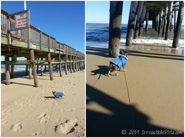 Sandbridge Pier Dog Friendly