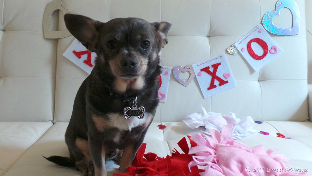 Valentine S Day Dog Toys : Diy no sew heart pet toy for valentine s day