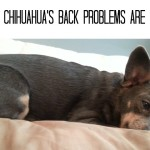 Chuy's Back Problems are Back