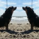 Gone Fishin' with Chuy Chihuahua!