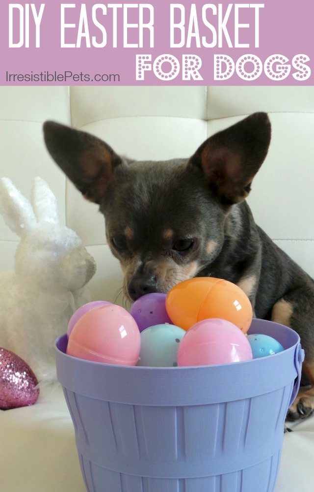 DIY Easter Basket for Dogs created by IrresistiblePets