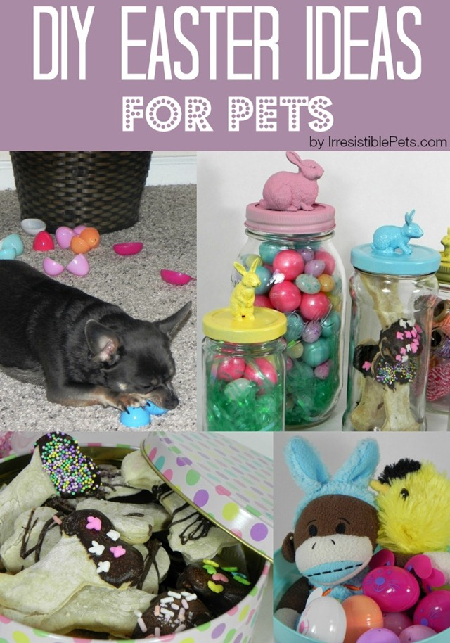 DIY Easter Ideas for Pets by IrresistiblePets.com