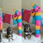 Feliz-Cinco-de-Mayo-from-Chuy-Chihuahua.jpg