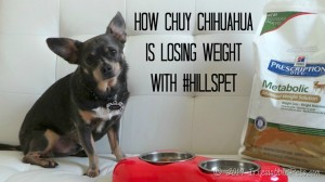 How Chuy Chihuahua is Losing Weight with #HillsPet