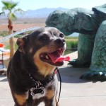 Irresistible Pets Around BlogPaws at the Westin Lake Las Vegas