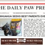 How To Find an Irresistible Pet Parent #BestDogEver