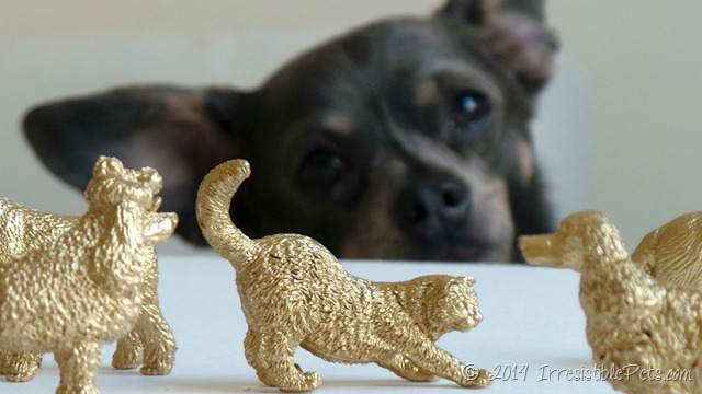 DIY Gold Pet Magnets Chuy Chihuahua by IrresistiblePets.com