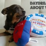 The Business of Pet Blogging and Unpacking from BlogPaws