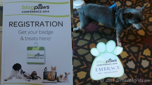 Chuy Chihuahua Around BlogPaws Lake Las Vegas
