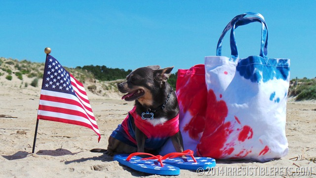 DIY Beach Bag Chuy Chihuahua