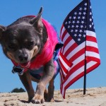 DIY Patriotic Tie Dye Dog Shirt