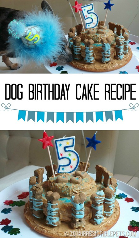 Birthday Cakes For Dogs To Eat Recipes ~ Dog birthday cake recipe for chuy s th irresistible pets