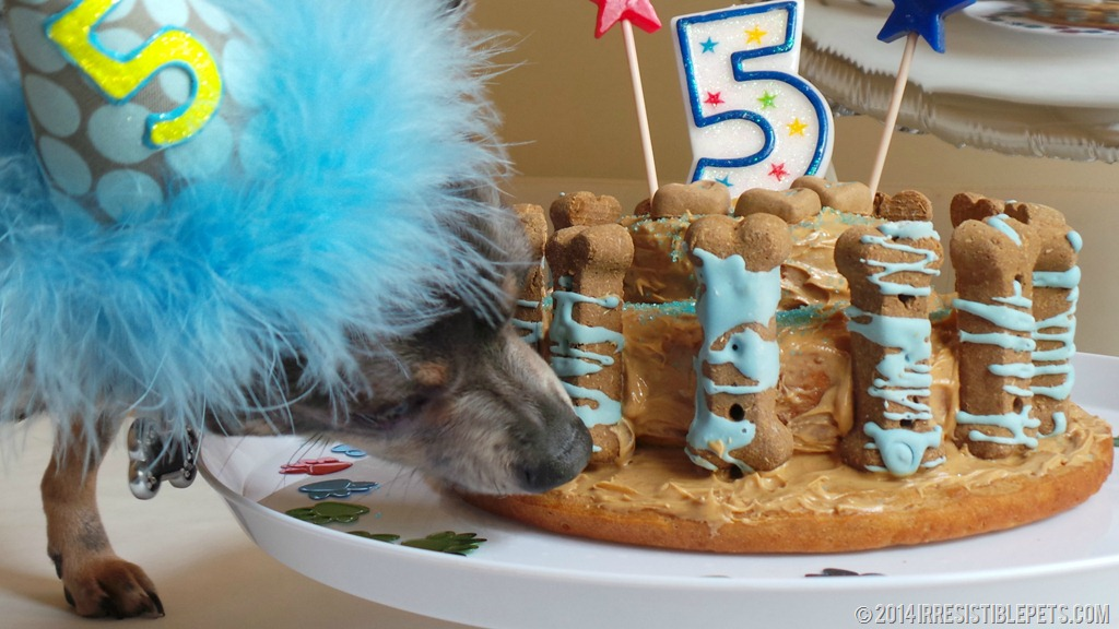 Dog Safe Cake Decorations : Dog Birthday Cake Recipe for Chuy s 5th Birthday ...