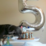 Dog-Birthday-Cake-for-Chuy.jpg