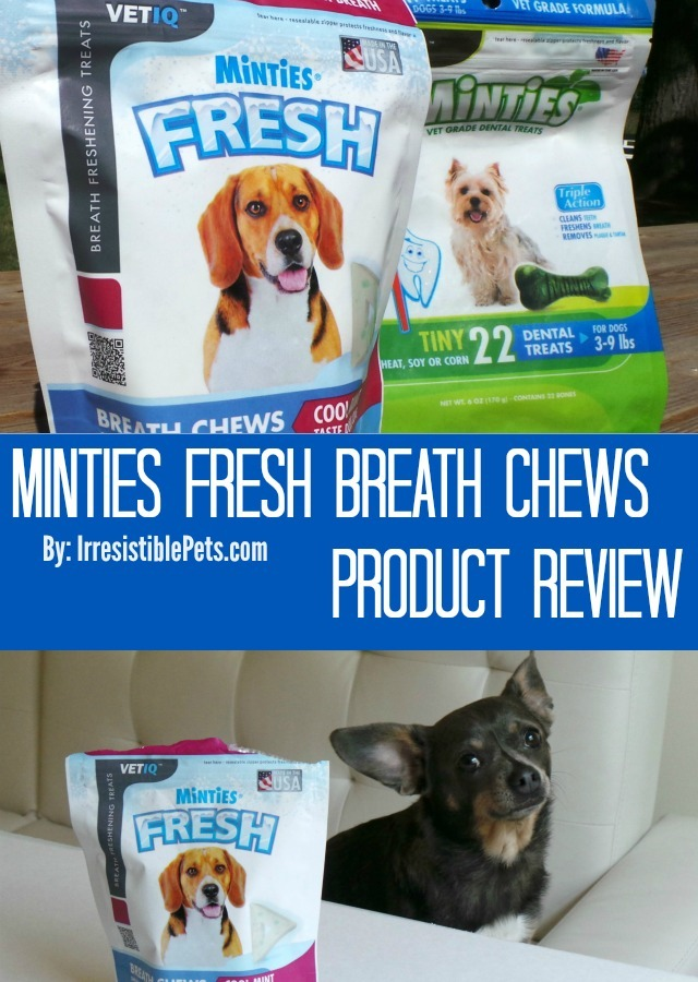 Minties Fresh Breath Chews Product Review by IrresistiblePets.com