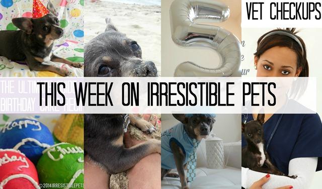 This Week on Irresistible Pets