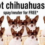 The Chihuahua Project
