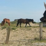 Chuy and the Wild Horses