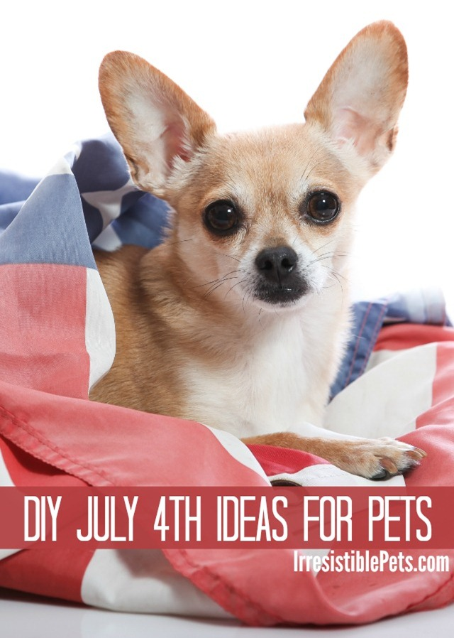 DIY July Fourth Ideas for Pets by IrresistiblePets.com