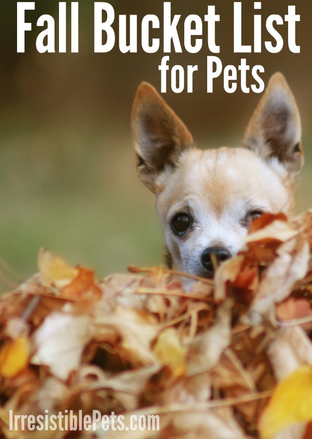 Fall Bucket List for Pets Printable at IrresistiblePets.com