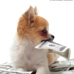 How I Save Money on Vet Bills with the Banfield Optimum Wellness Plan