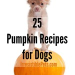 Irresistible Pumpkin Recipes for Dogs