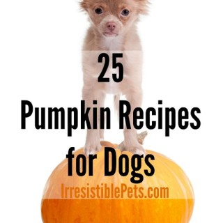 25-Pumpkin-Recipes-for-Dogs-by-IrresistiblePets.com_.jpg