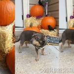 Irresistible Howl-O-Ween Dog Treats