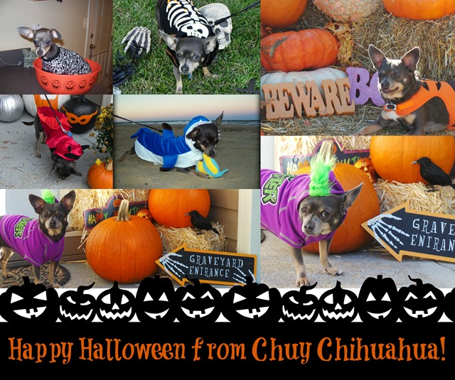 Happy Halloween from Chuy Chihuahua
