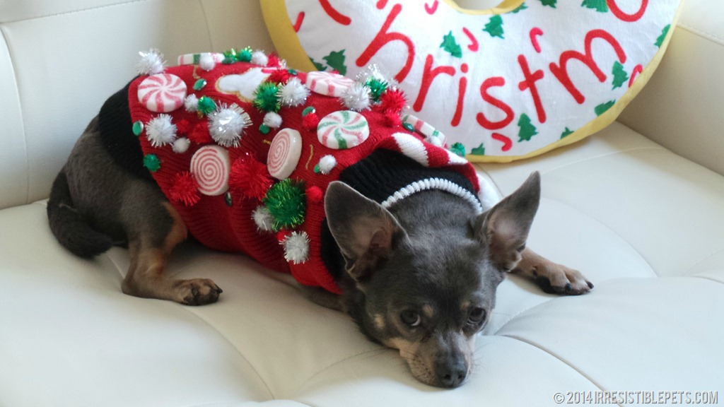 Tacky christmas sweaters for dogs