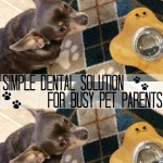 Simple Dental Solution for Busy Pet Parents  #SmoochUrPooch