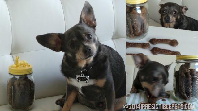 TropiClean Dental Chews Chuy Chihuahua