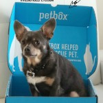Chuy's PetBox Favorites!