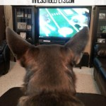 Dogs Watching Dogs on TV #MyPetLovesLG4KTV